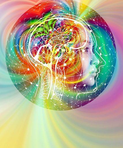 Klasse 2000 – Unser Gehirn